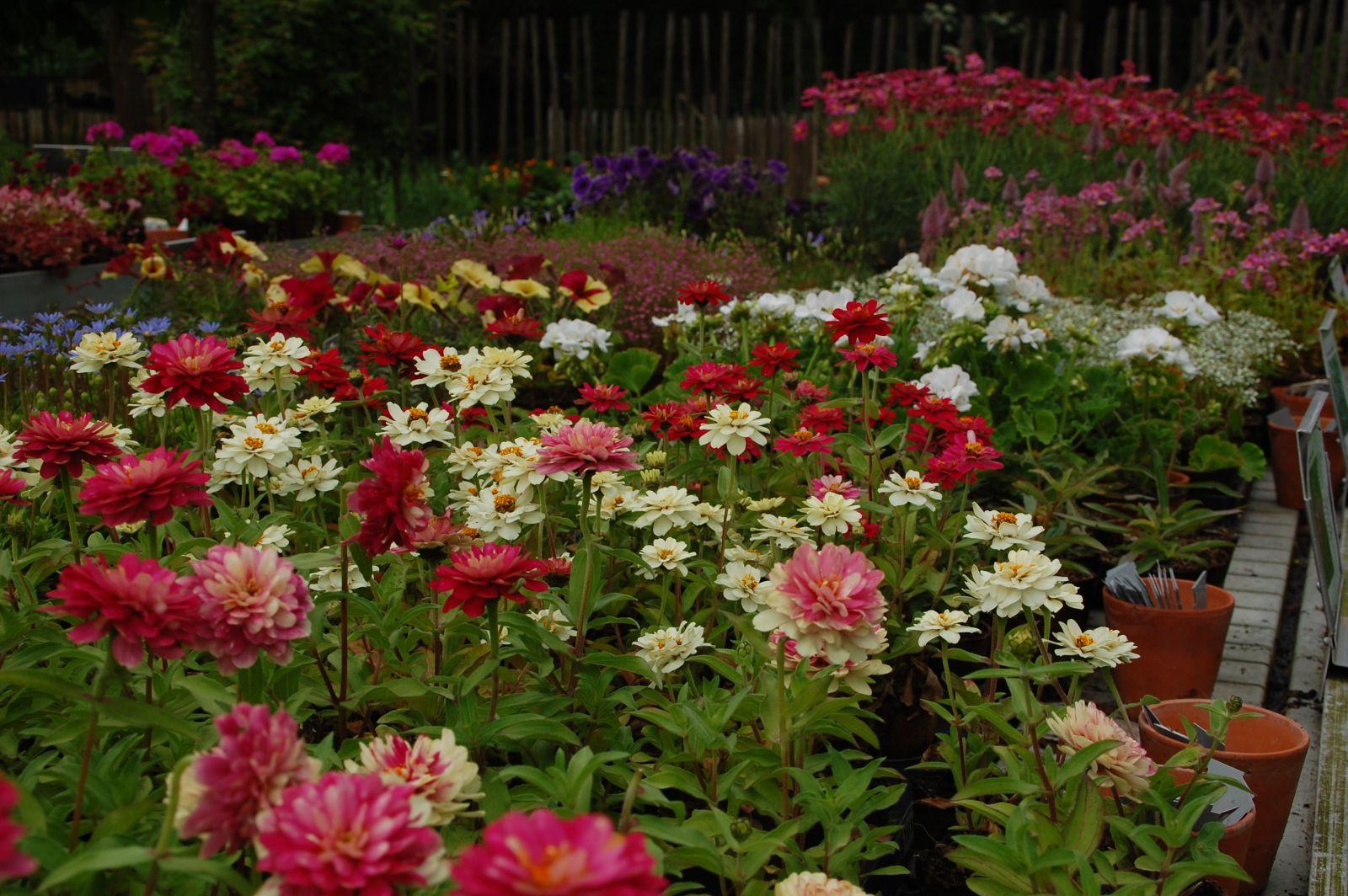 Fleurs mois de juillet id e inspirante pour for Alarme maison castorama